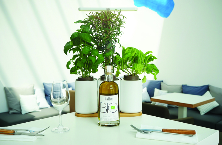 pr t pousser your herbs grown directly in your house vins et gastronomie